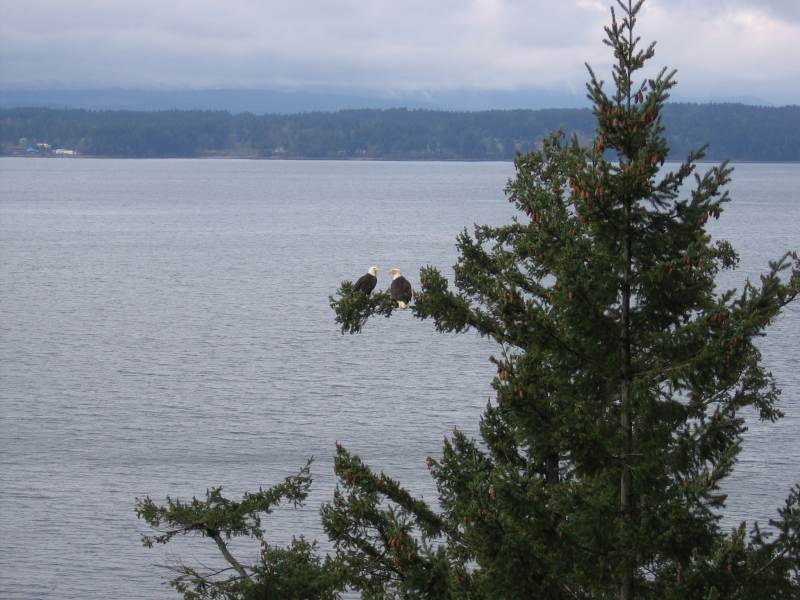 Eagle pair from front porch